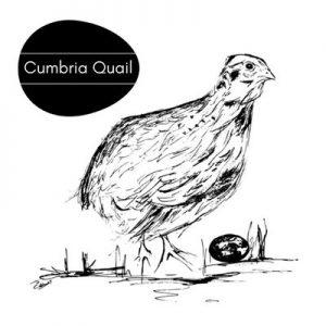 Cumbria Quail