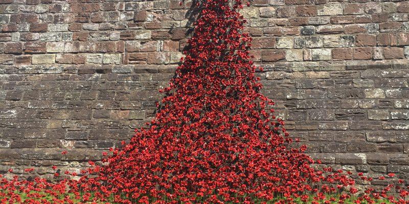 Poppies cascading down Carlisle Castle
